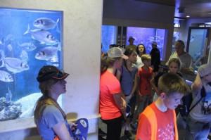 5 Ogled akvarija prvi